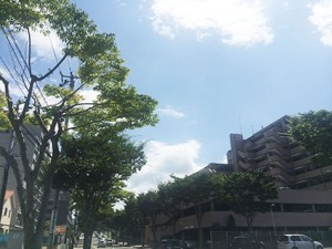 多賀城の空(2017晩夏 事務所近くにて)